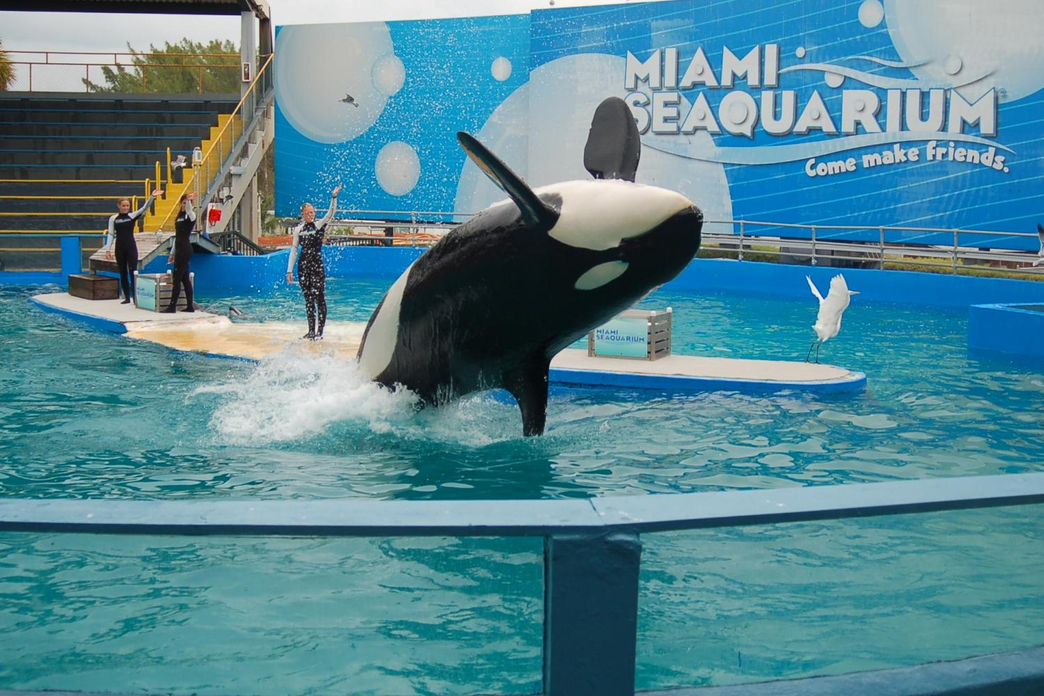 Miami Seaquarium - Attraction Ticket