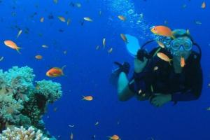 Key West Day Tour & Snorkeling Adventure