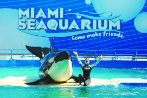 Miami Sea Aquarium Tour With Transportation Packages
